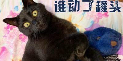 猫咪看恐怖片之后做噩梦!猫:谁动了我的罐头!