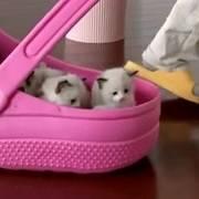 照顾那么多猫孩子还这么有耐心,小猫咪太幸福了,这是什么级别的奶爸?