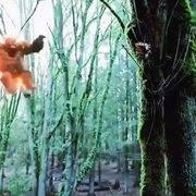 闪电侠和大猩猩合体,这也太猛了吧!瞬间被它圈粉!